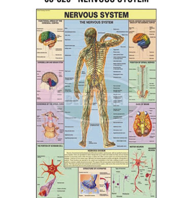 MS Chart – Nervous System Synthetic 65320
